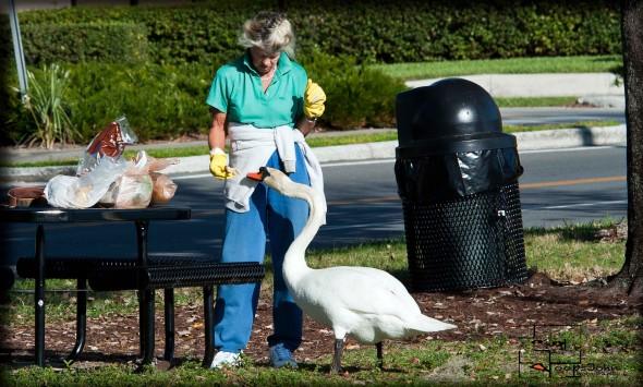 lady feeding swan