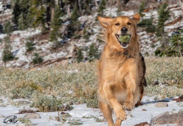 Rocky with tennis ball