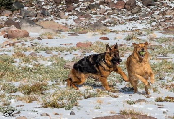 Tzuri & Rocky